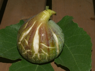 Figs in my terrace (31-August-2007)