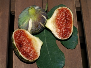 Figs Cendrosa. 13 July 2007
