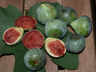Verdal figs in October, 40 gr. weight average.
